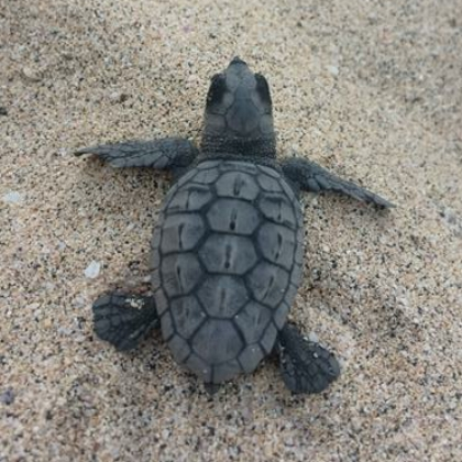 Turtle tours in Cabo Verde or Cape Verde